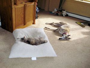 Mo is now comfortable enough to boot the dog from her bed.  Home is the SAFE place.