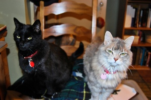 Miss Mo and Mr Boots Red wait for their nightly pills