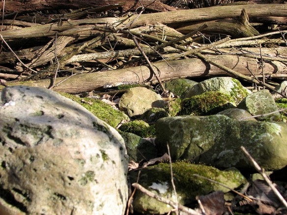 Sticks and Stones by Chad Fust on Flickr.  Used under the Creative Commons 2.0 Attribution, No Commercial, Share Alike license granted.
