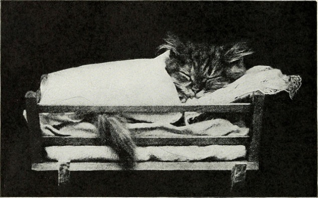 sleeping kitty Internet archive Book Images on flickr 7May2016