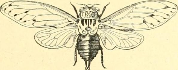 cicada-internet-archive-book-image-22jul16-flickr