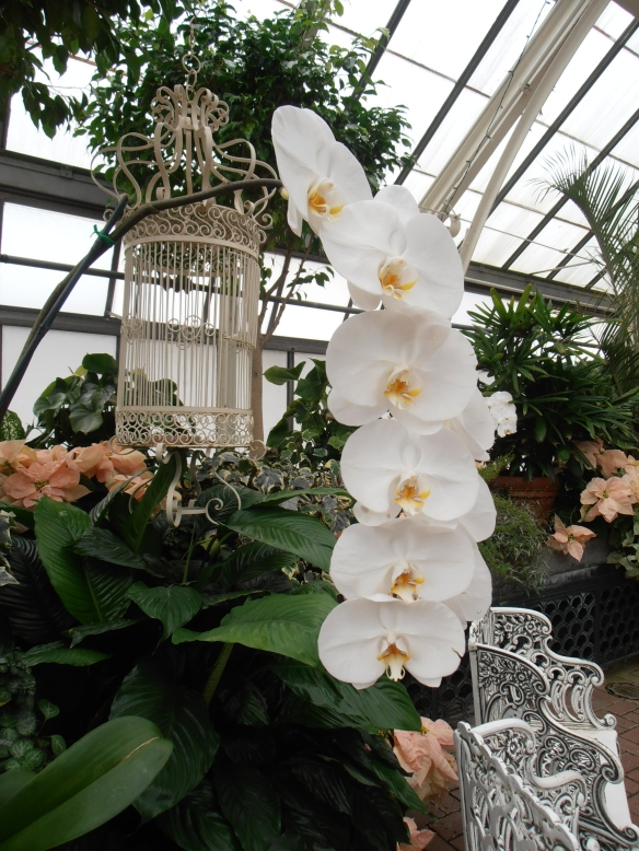 Orchid in the Biltmore greenhouse. Photo by me.